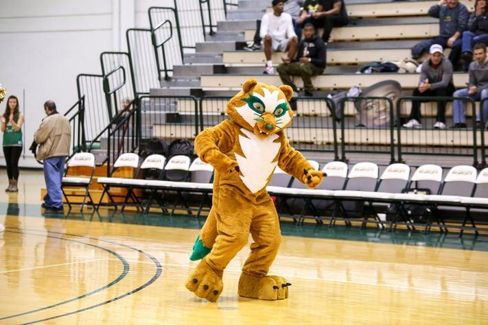 BearCat mascot custom design Vinny COllege University